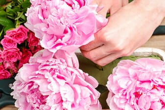Save money - buy bulk flowers for your event
