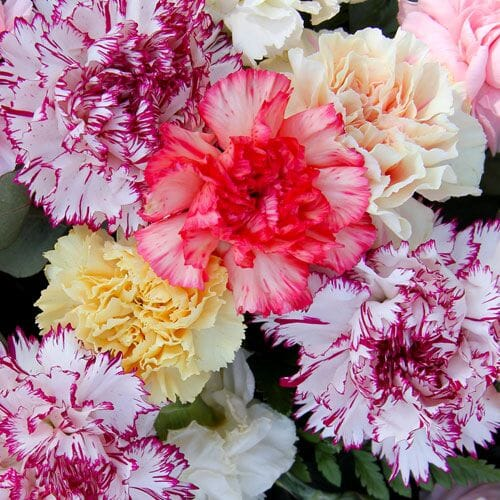 Assorted Color Box Flowers