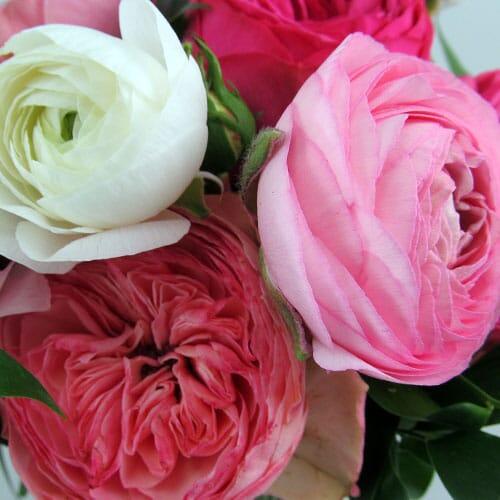 Garden Roses - Bulk
