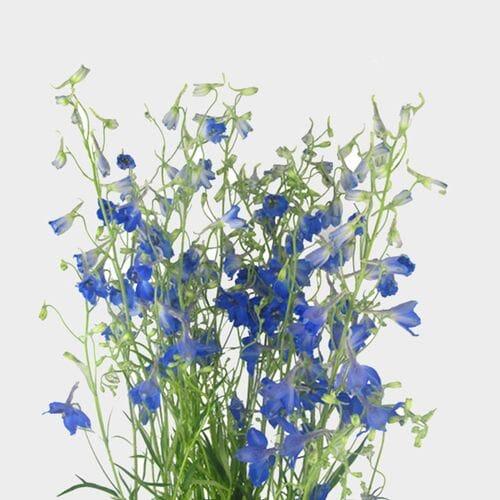 Delphinium Dark Blue Flower