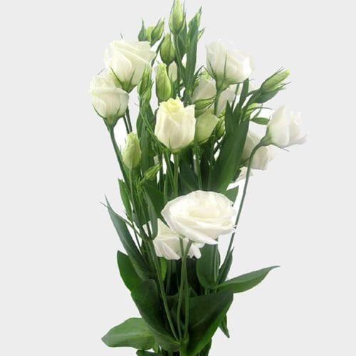 Wholesale lisianthus flowers