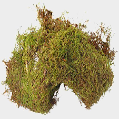 Sheet Moss Greenery