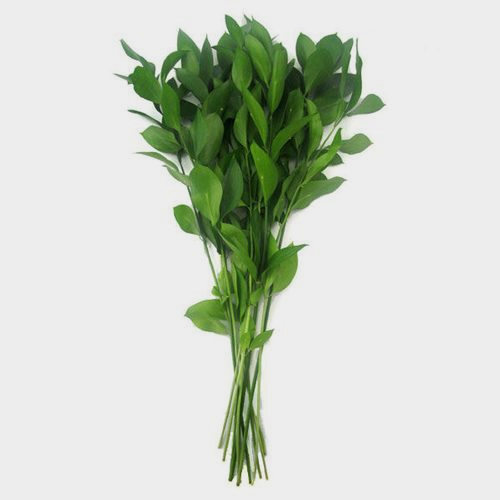 Israeli Ruscus Green