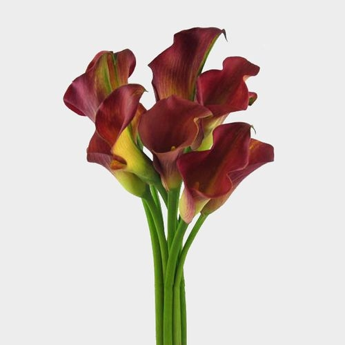 Calla Lily Mini Burgundy Flower