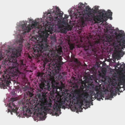 Kale Pink