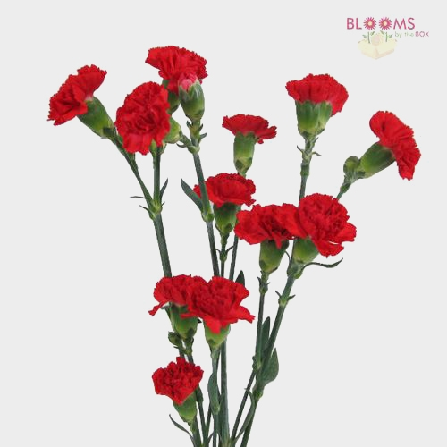Red Mini Carnation Flowers
