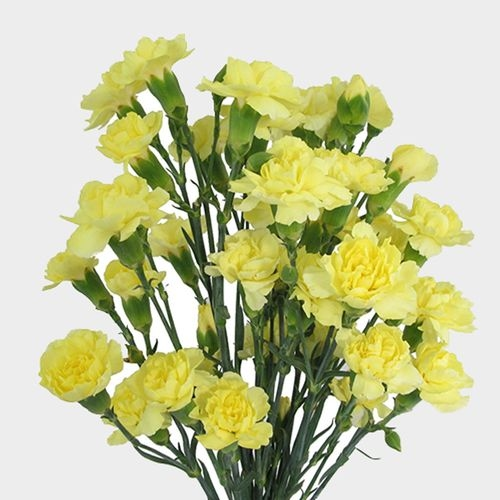 Yellow Mini Carnation Flowers