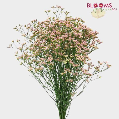 Limonium Pink Flowers