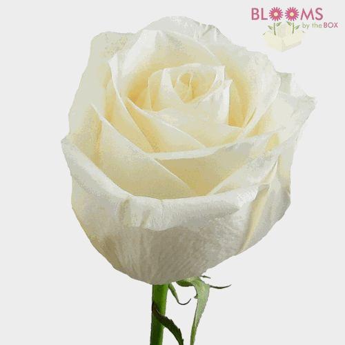 Rose Vendela Cream 40cm