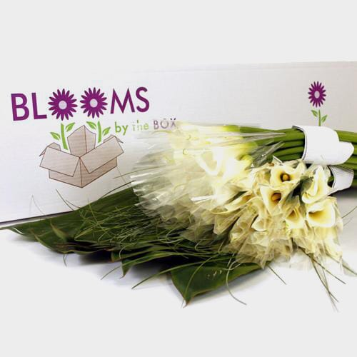 Traditional Calla Lily DIY Wedding Pack
