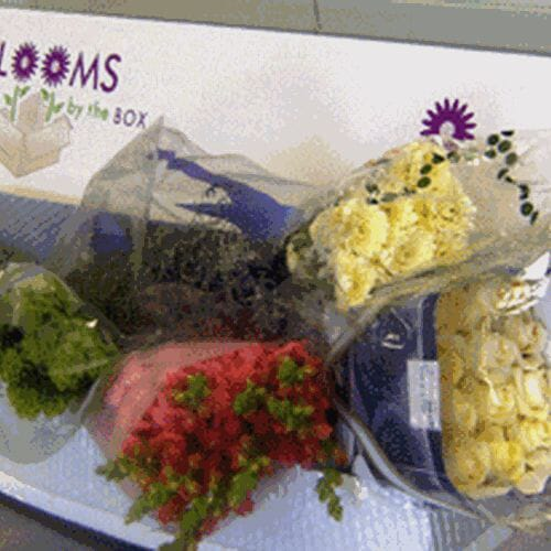 Wholesaler's Choice DIY Flower Pack (Large)