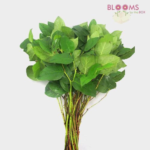 Lemon Leaf Greenery