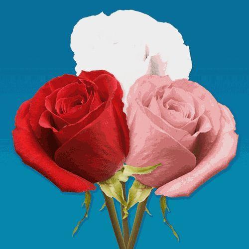 V-DAY Spray Roses (Love Pack) 50 Cm.