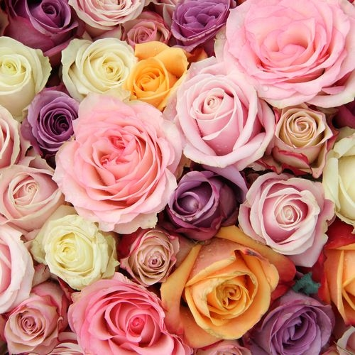 Assorted Color Roses - No Red 40 cm.