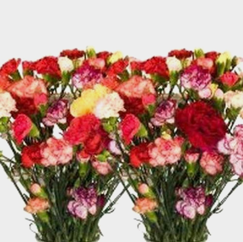 Mini Carnations - Assorted Colors