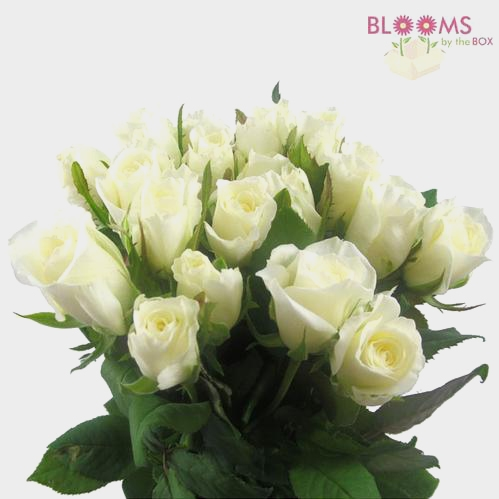 Sweetheart Roses White
