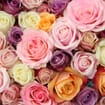 Assorted Color Roses - No Red 60 cm.