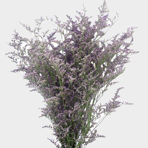 Limonium Misty Blue Flower Wholesale Blooms By The Box