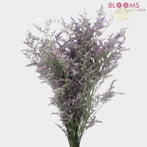 Limonium Misty Blue Flower