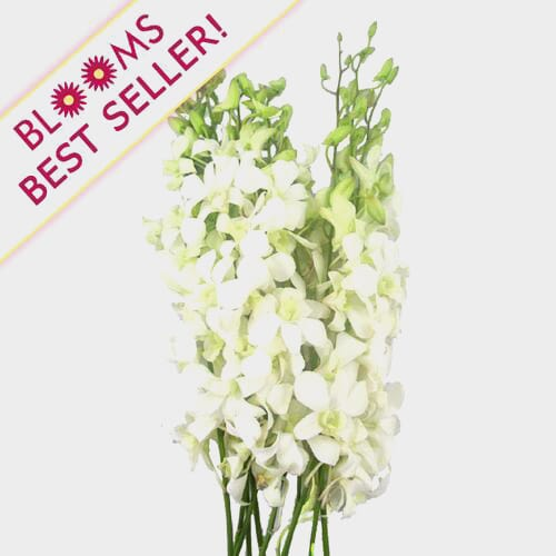 Dendrobium Orchid White Flowers