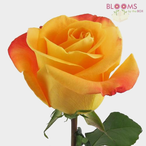 Orange Rose 40 cm.