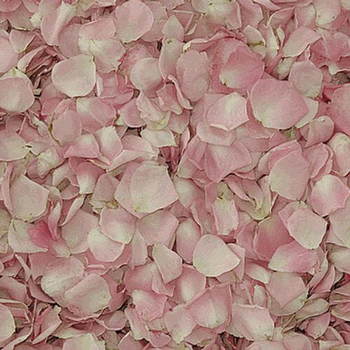 Petite Pink FD Rose Petals (30 Cups)