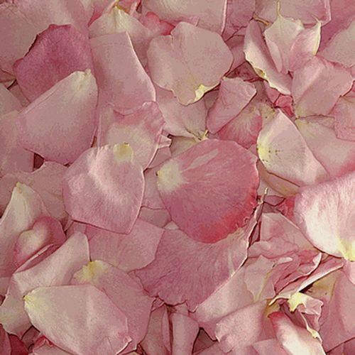 Bridal Pink FD Rose Petals (30 Cups)