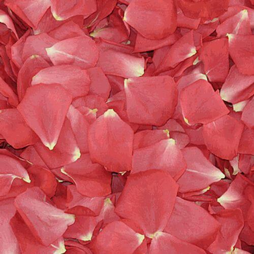 Passion Pink FD Rose Petals (30 Cups)