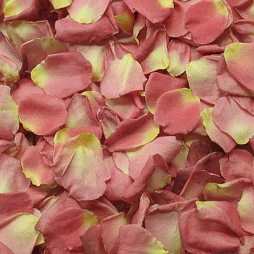 Alluring Coral FD Rose Petals (30 Cups)