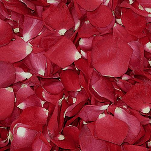 Ruby Red FD Rose Petals (30 Cups)