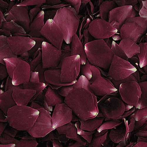 Burgundy Red Rose Petals (30 Cups)