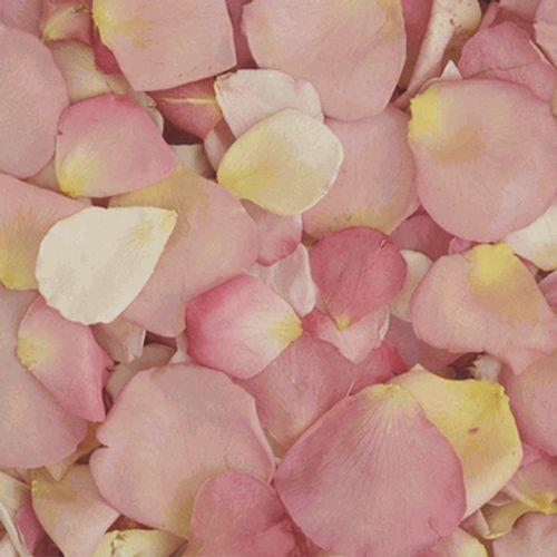 Assorted Pastel Blend FD Rose Petals (30 Cups)