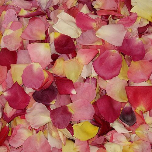 Assorted Bright Blend FD Rose Petals (30 Cups)