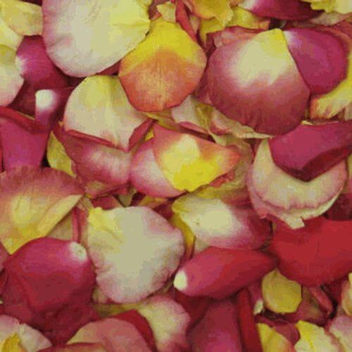 Cha Cha Blend FD Rose Petals (30 Cups)