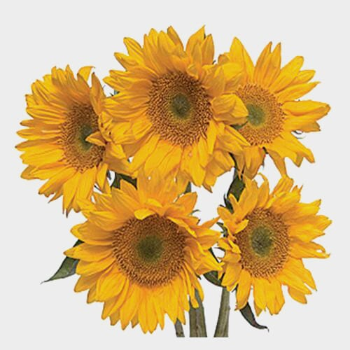 Sunflower Yellow Large