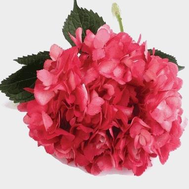 Spray Tinted Hydrangea Dark Pink