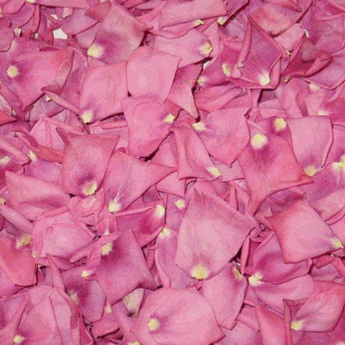 Bright Pink FD Petals (30 Cups)