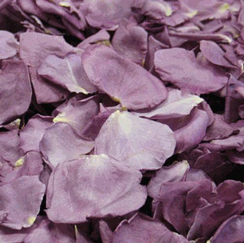 Fragrant Plum Rose Petals (30 Cups)