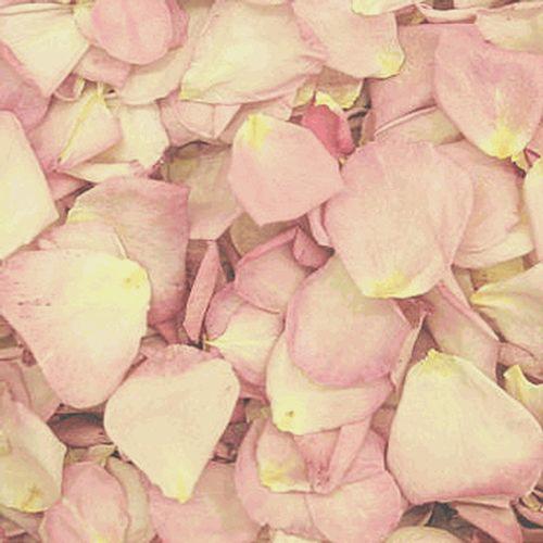 Hint Of Pink Petals (30 Cups)