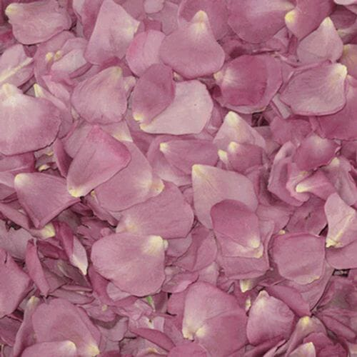 Lovely Lavender FD Rose Petals (30 Cups)