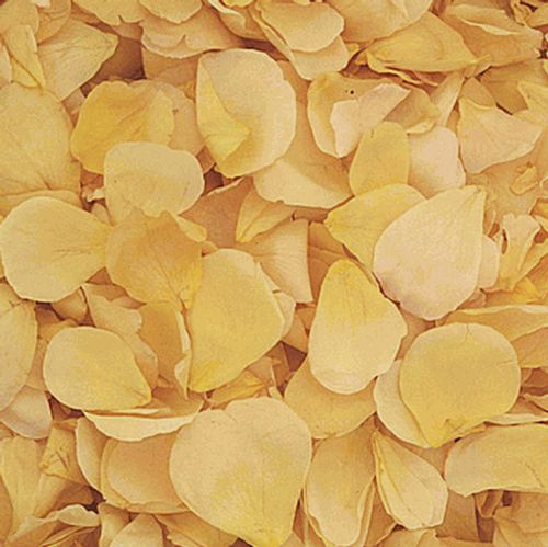 Soft Yellow Rose Petals (30 Cups)
