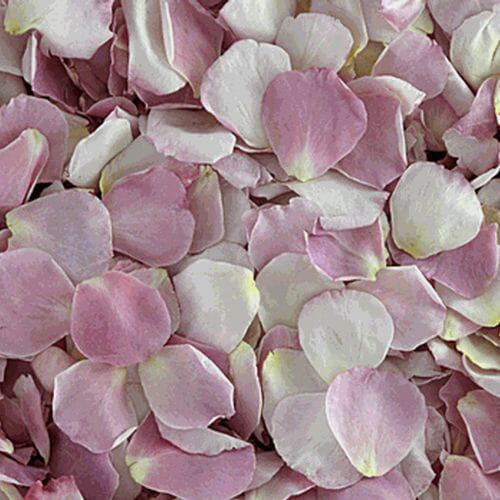 Our Lady Rose Petals (30 Cups)