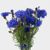 Blue Flowers Wholesale Bulk Flowers Blooms By The Box