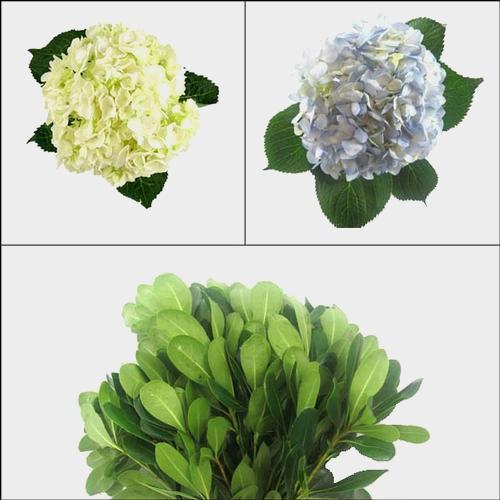 Hydrangea Flower DIY Flower Pack