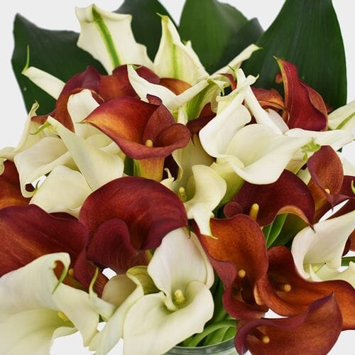 Mini Calla Lily Wedding Pack