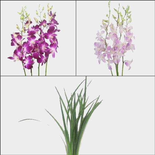 Submerged Orchid Flower Pack