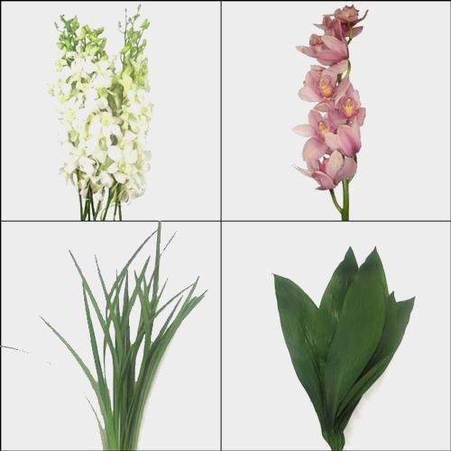 Orchid Flowers DIY Flower Pack