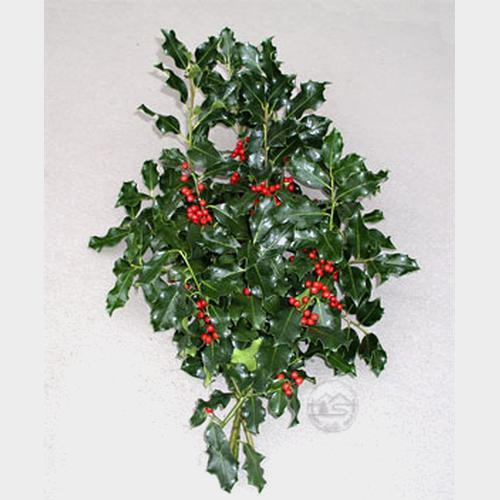 Green Holly Bunch