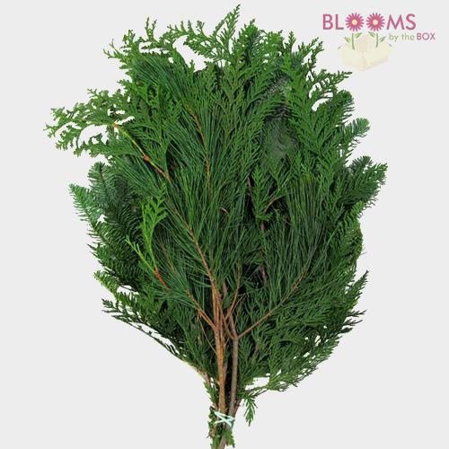 Mixed Evergreens 30 Lbs Box