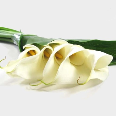 Large White Calla Lily Bouquet Wholesale Blooms By The Box